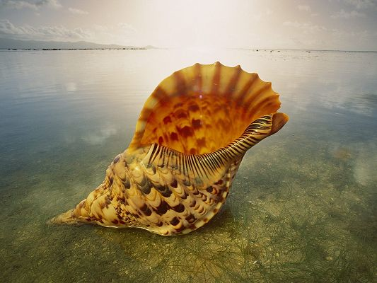 beautiful-nature-landscape-an-orange-shell-in-the-peaceful-sea-can-you-hear-it-sing