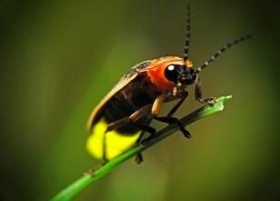 firebug 2
